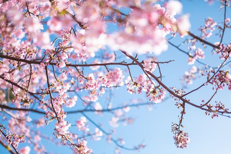 ~お知らせ【4/13~4/27の期間の休館のお願い】~