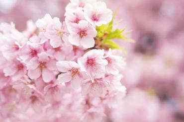 24時間滞在~春の癒しプラン